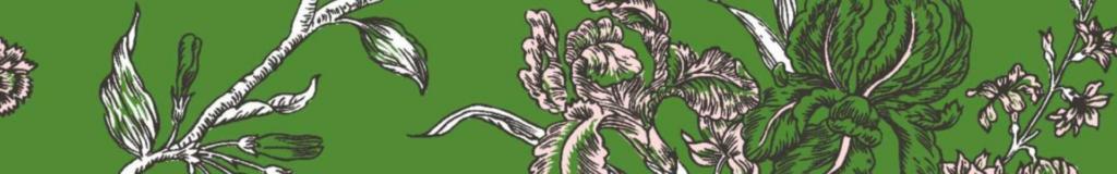 Carnation banner